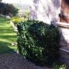 Dumis un cache clim avec des feuilles nature