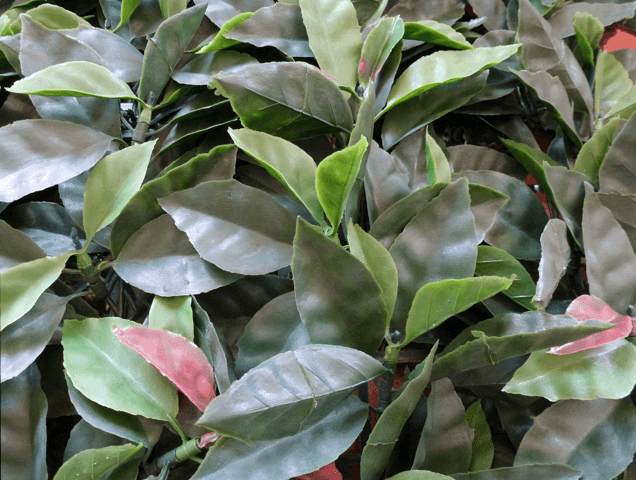 Artificial leave photinia for air conditioning cover