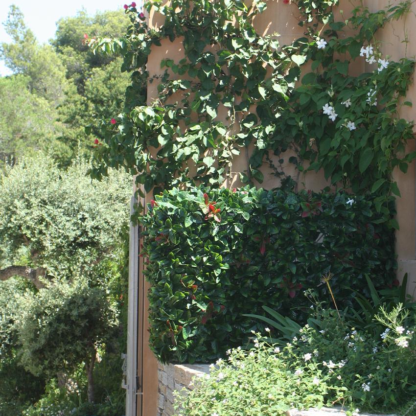 cache-clim-discret-vegetation-buisson